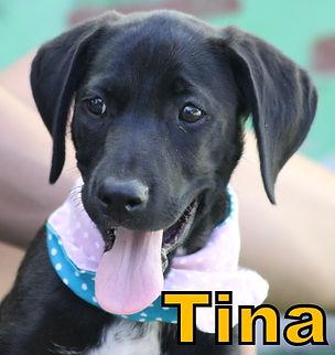 Tina.JPG