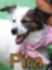Pira.JPG