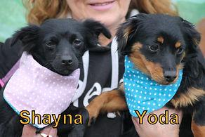 Shyna-Yoda.JPG