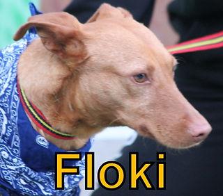 Floki.JPG