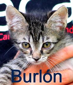 BURLÓN (4).JPG