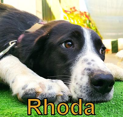Rhoda.jpg