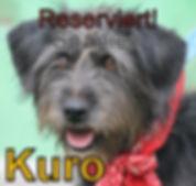 Kuro-neu.JPG