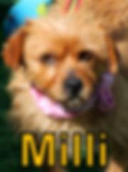 Milli.JPG
