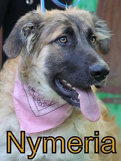 Nymeria.JPG