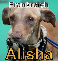 Alisha-neu.JPG