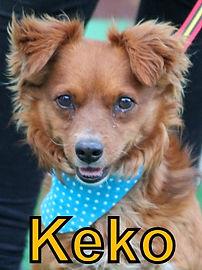 Keko.JPG