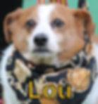 Lou.JPG