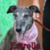 Estrel.JPG
