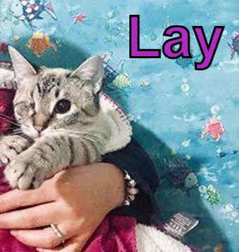 Lay.jpg