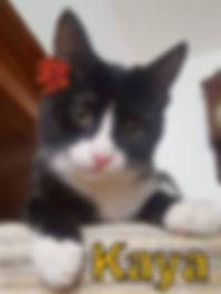 Kaya-cat.jpg