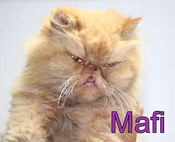 Mafi.JPG