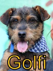 Golfi.JPG