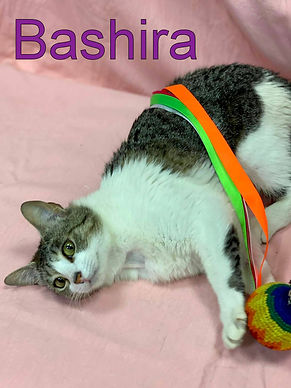 Bashira.jpg