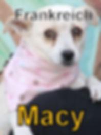 Macy-neu.JPG