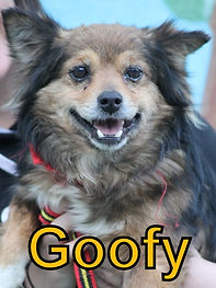 Goofy.JPG