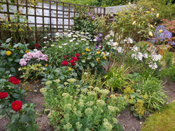 Richard Ashwell - Garden 4