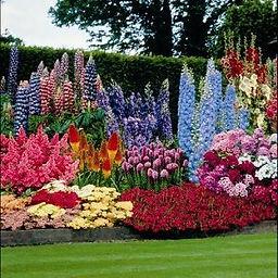 Summer Perennials.jpg
