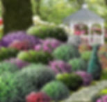 Shrub Garden.jpg