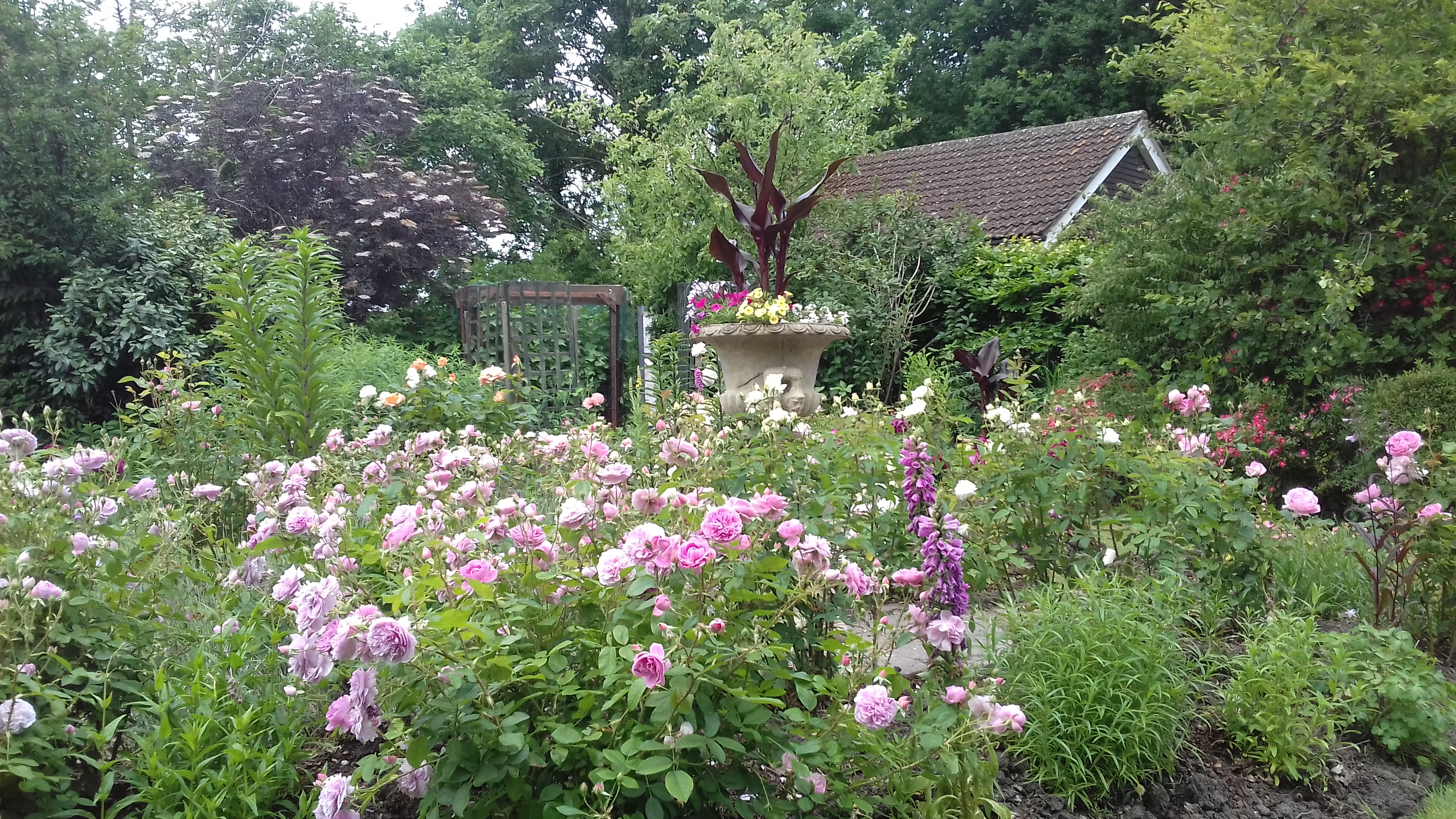 Tony Buckle -Garden