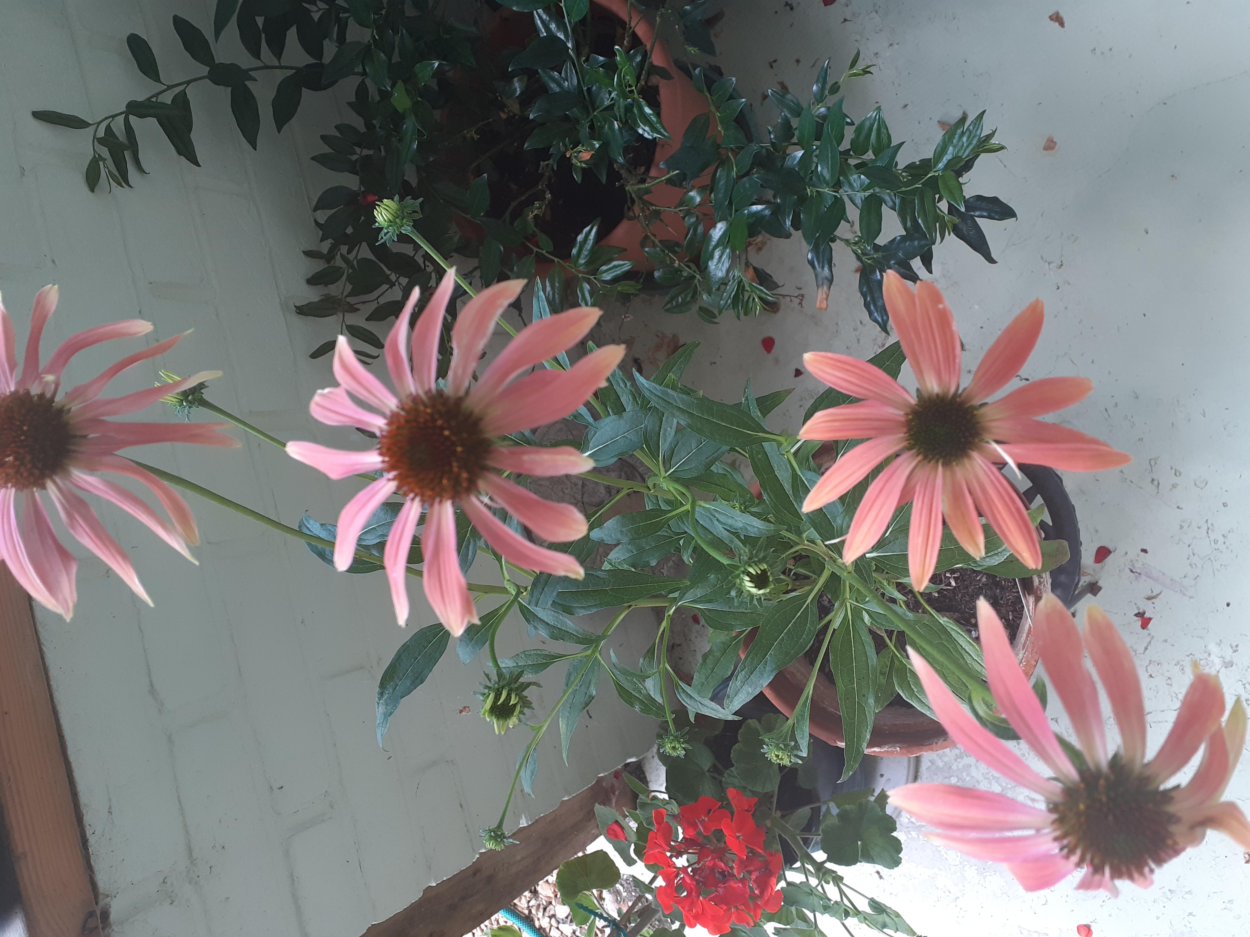 Juliet Breschinsky Garden 2