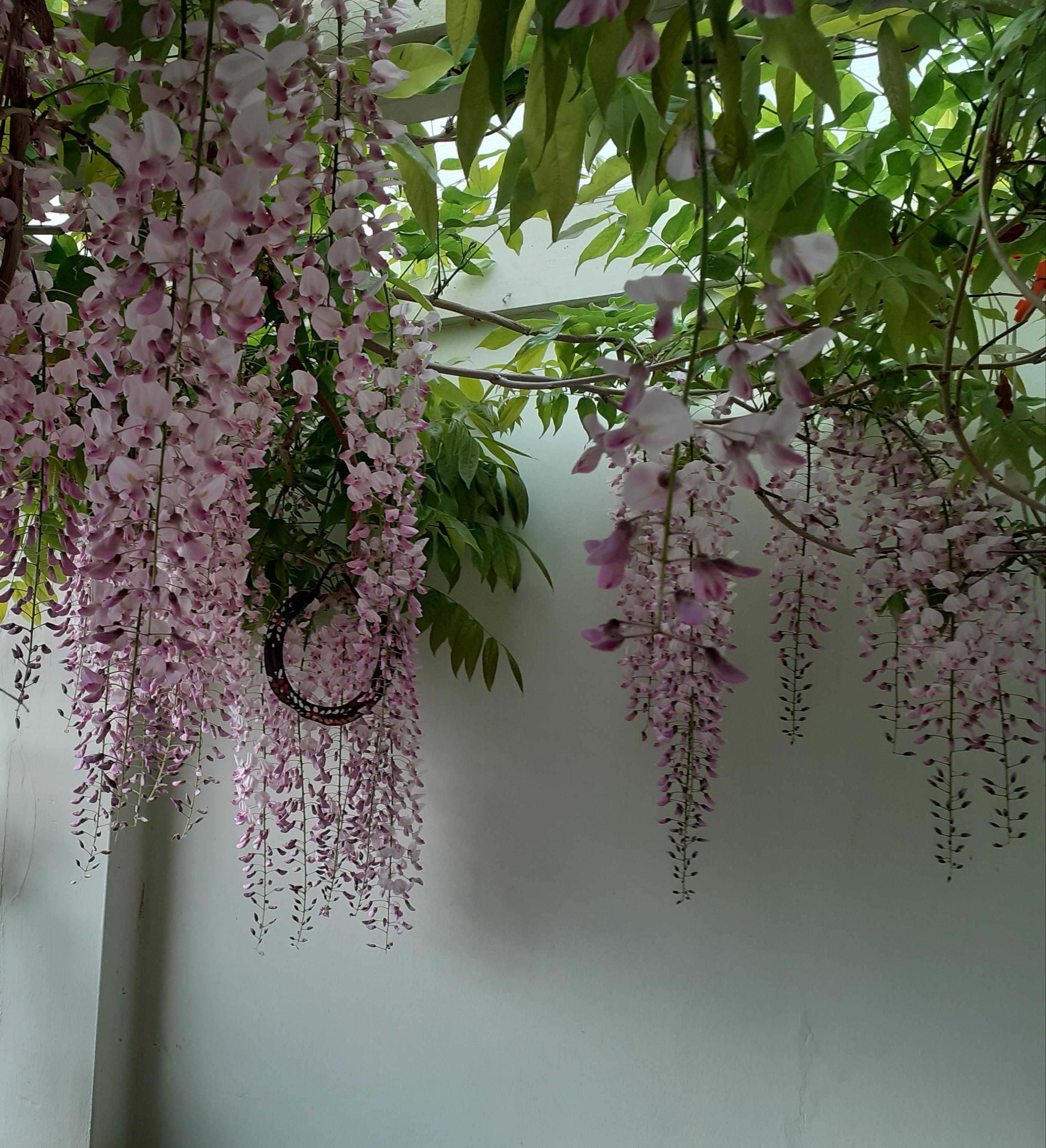 Juliet Breschinsky Garden 5