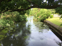 Cherie Cheetham - View from Eversley Str