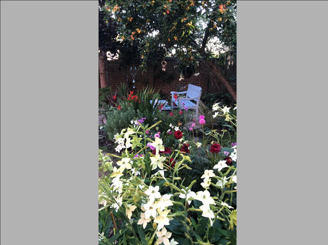 Angela Hulbert - Garden2