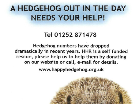 Happy Hedgehogs with Jayne Morgan