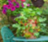 Fruit in a small garden.jpg