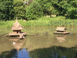 Cherie Cheetham  - Duck pond at Hartley