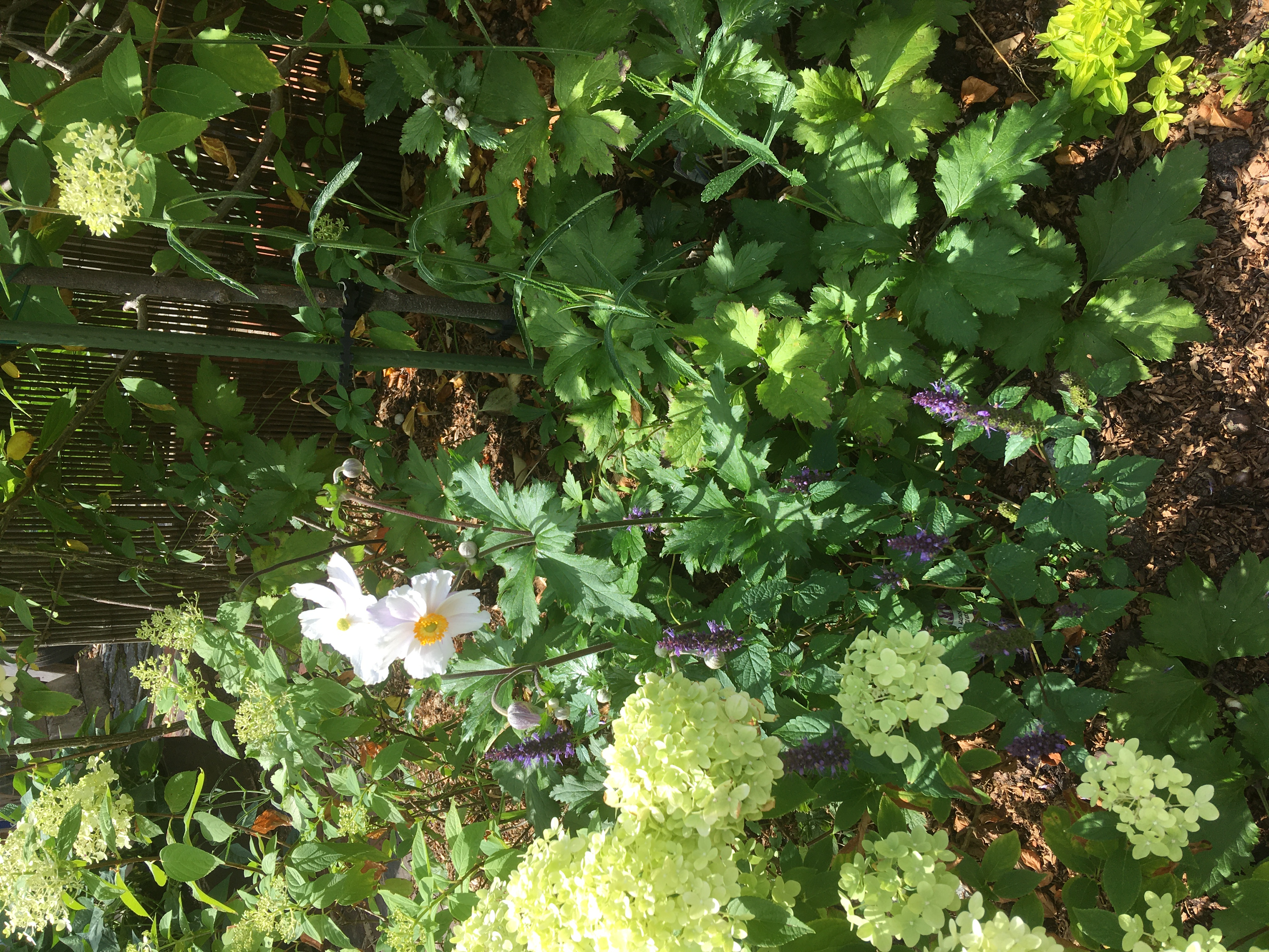 Cherie Cheatham - Garden 2