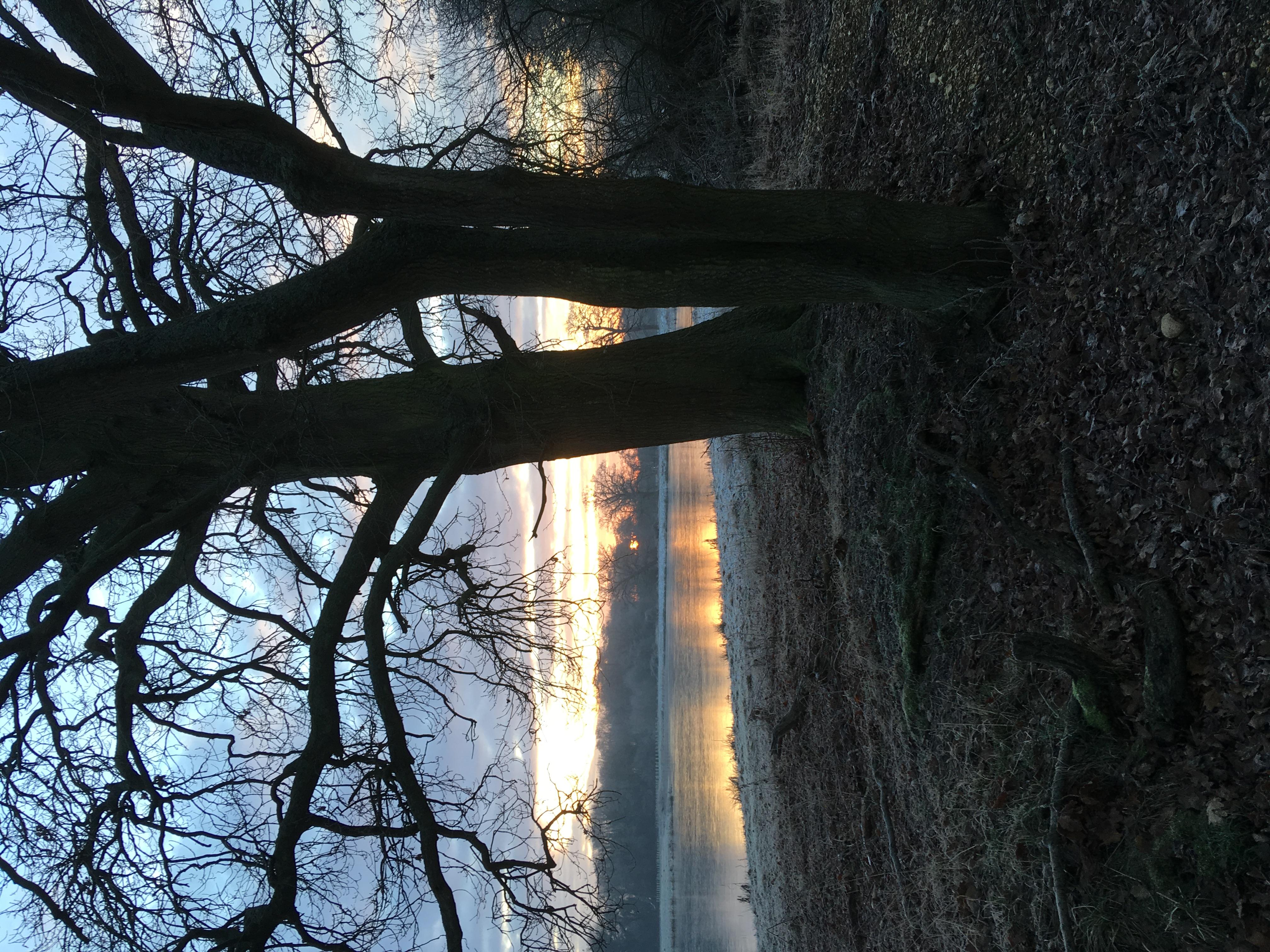 Cherie Cheetham - Lakes near Longwater R