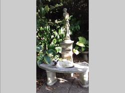 Tony Buckle - Garden visitor