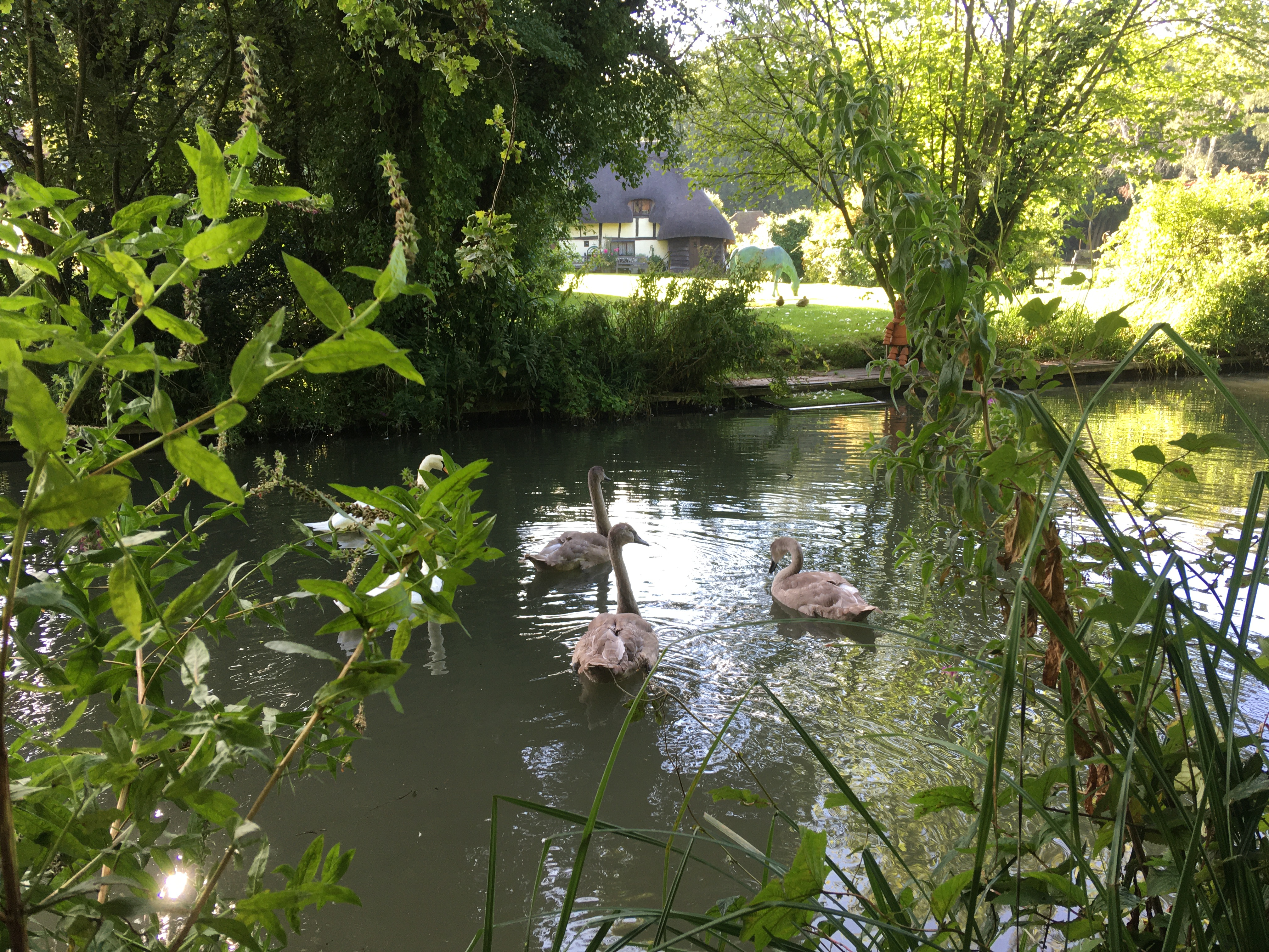 Cherie Cheetham - Blackwater Canal with