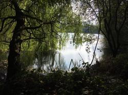 Cherie Cheetham - Swan Lakes