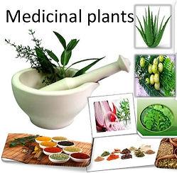 Medicinal Plants.jpg