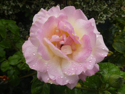 Rayner Mayer - Garden1