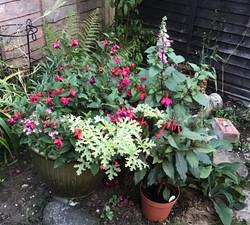 Eleni Kirkbride - Variety of plants