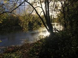 Cherie Cheetham -Swan Lake Park 1