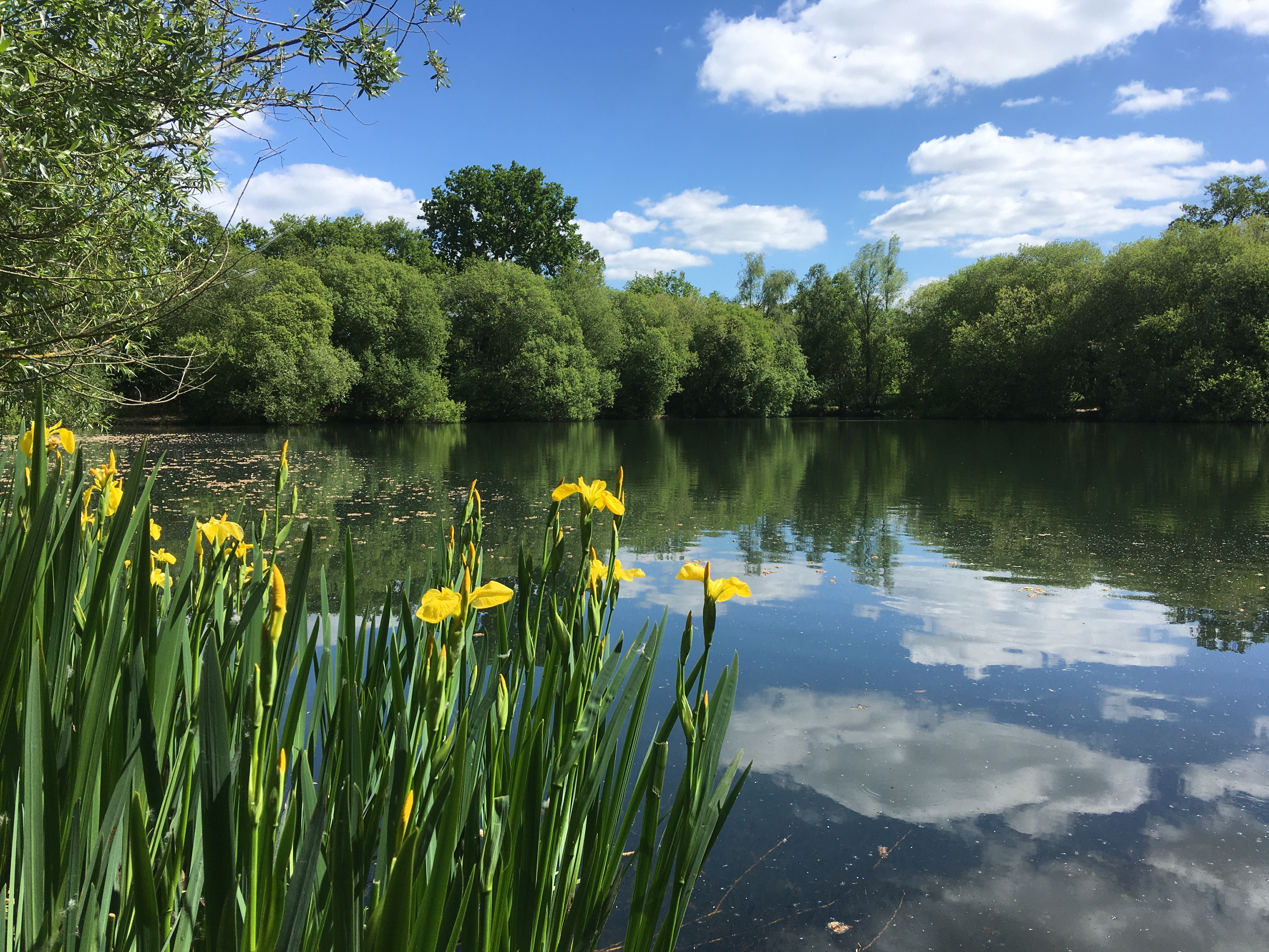 Cherie Cheetham - Swan Lake Country Park