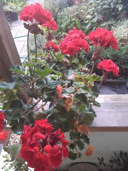 Juliet Breschinsky Garden 1