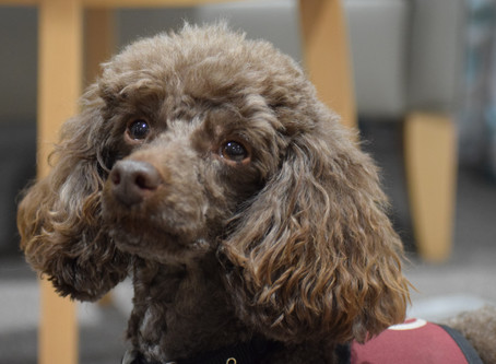 52nd AGM & Hearing Dogs for Deaf People