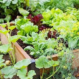 Small vegetable garden.jpg