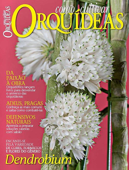 revista de orquídeas, jardinagem, revista digital, cultivo em vaso, orquídeas