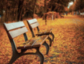 Bench on Autumn Leaves_edited_edited.jpg