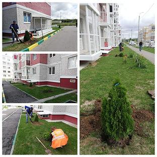 Озеленение придомовой территории.jpg