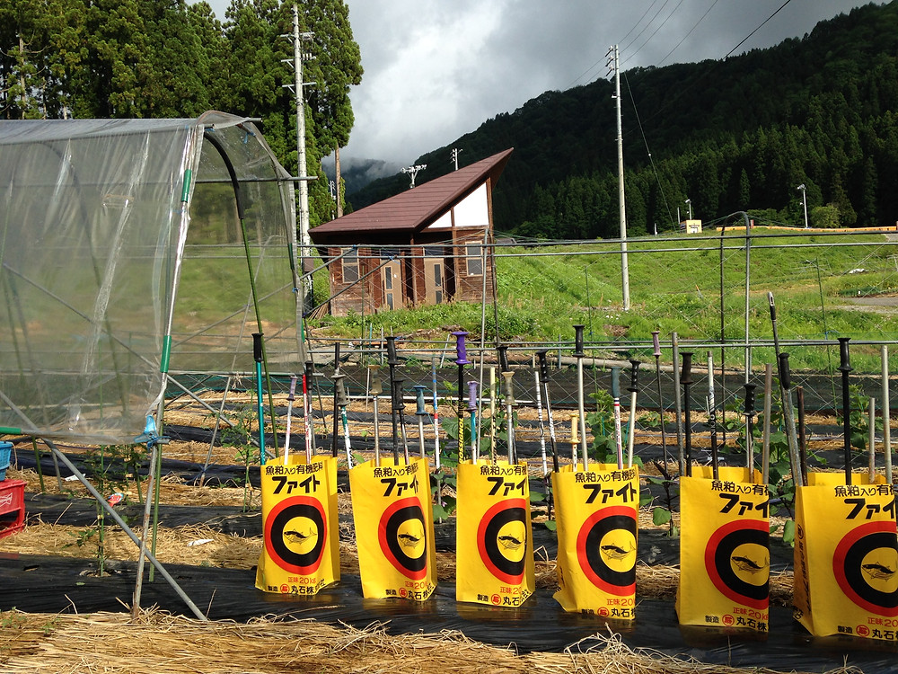 Ski poles uncovered by the melting snow used as garden stakes