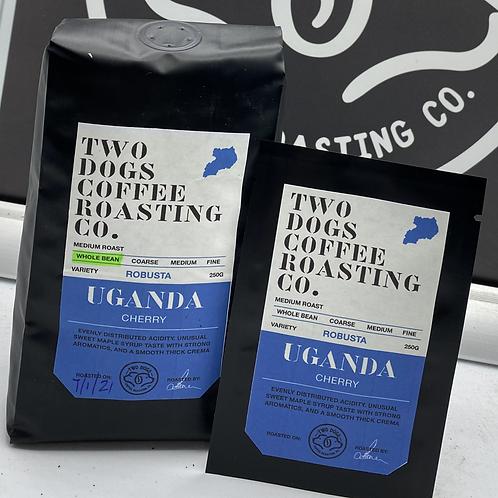 Individual Uganda Cherry drip coffee bags