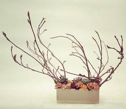 Kompozicija su magnolija